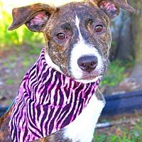 Adopt A Pet :: Bonnie - Batesville, AR