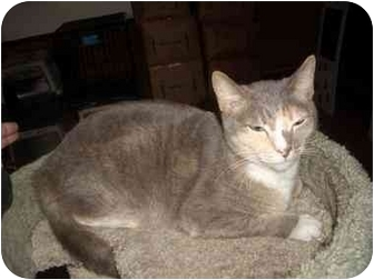 Calico Cat for adoption in Macclenny, Florida - ADOPT ME!