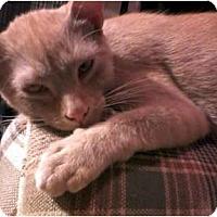 Adopt A Pet :: Preston - Jacksonville, FL