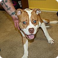 Adopt A Pet :: Rio - Warren, MI