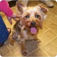 Adopt A Pet :: Buddy - Duluth, GA