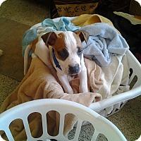 Adopt A Pet :: Zander - Alliance, NE