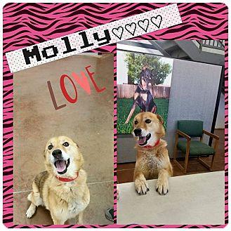 German Shepherd Dog/Jindo Mix Dog for adoption in Hurricane, Utah - Molly