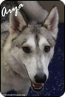 Husky Mix Dog for adoption in Rockwall, Texas - Arya