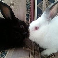 Adopt A Pet :: Sokka and Iroh - Watauga, TX