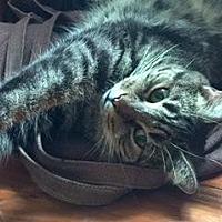 Adopt A Pet :: Joanelle - Philadelphia, PA