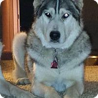 Adopt A Pet :: Gage - Chewelah, WA