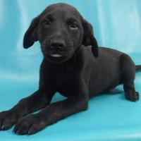 Adopt A Pet :: Xena - Chicago, IL