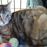 Adopt A Pet :: Coco Chanel - Erie, PA