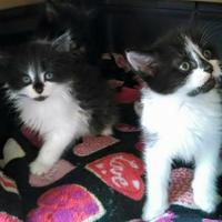 Adopt A Pet :: Ellie - Harrisonburg, VA