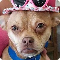 Adopt A Pet :: Penny - Pompton Lakes, NJ