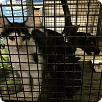 Adopt A Pet :: Jethro - Byron Center, MI
