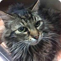 Adopt A Pet :: KATARINA - Carlsbad, CA