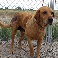 Adopt A Pet :: Bob - Sterling, CO