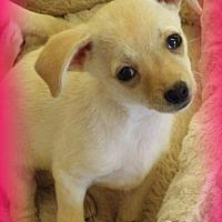 Adopt A Pet :: Robin - Anaheim Hills, CA