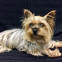 Adopt A Pet :: Mimi - Encino, CA