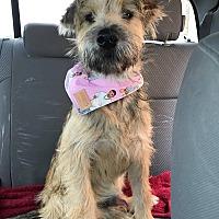 Adopt A Pet :: Charlie - Snyder, TX