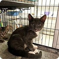 Adopt A Pet :: Anya - Mount Laurel, NJ
