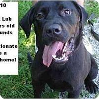 Adopt A Pet :: # 231-10 @ Animal Shelter - Zanesville, OH