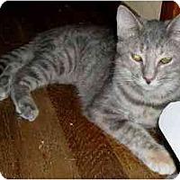 Adopt A Pet :: April - Jacksonville, FL