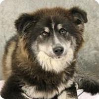 Adopt A Pet :: Sweet boy Charcoal--UPDATE - Baltimore, MD