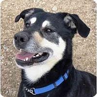 Adopt A Pet :: Nojack - YERINGTON, NV