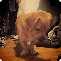 Adopt A Pet :: Frank - San Antonio, TX
