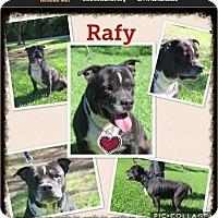 Adopt A Pet :: Rafy - Homestead, FL