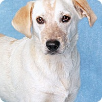 Adopt A Pet :: Jenny - Encinitas, CA