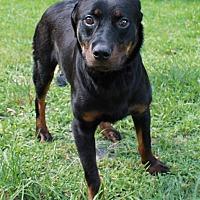 Adopt A Pet :: Creed - Boca Raton, FL
