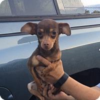 Adopt A Pet :: Lucius - Reno, NV