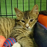 Adopt A Pet :: Frisky - Bloomingdale, NJ