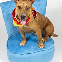 Adopt A Pet :: Gatsby - Baton Rouge, LA