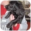 Photo 2 - Dachshund/Spaniel (Unknown Type) Mix Dog for adoption in Marseilles, Illinois - Suzy Q