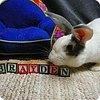 Adopt A Pet :: Brayden - Newport, DE
