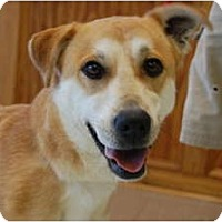 Adopt A Pet :: Suzzy - Hagerstown, MD