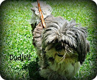 Shih Tzu Mix Dog for adoption in Vancleave, Mississippi - Dudley