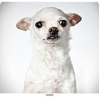 Adopt A Pet :: Danielle - New York, NY
