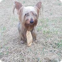 Adopt A Pet :: Kosmic - Hazard, KY