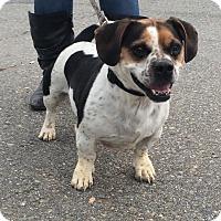 Adopt A Pet :: Diego - Freeport, ME