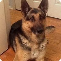 Adopt A Pet :: Griff - Sacramento, CA