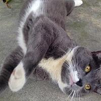 Adopt A Pet :: Nickel Too - Mission Viejo, CA