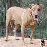 Adopt A Pet :: Rufus - Allston, MA
