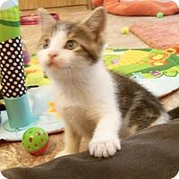 Adopt A Pet :: BOZ - Medford, WI