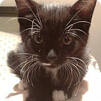 Adopt A Pet :: Sunny (JS) - Trenton, NJ