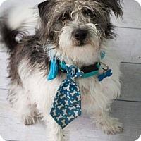 Adopt A Pet :: Robbie - Houston, TX