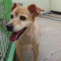 Terrier (Unknown Type, Small) Mix Dog for adoption in Oakton, Virginia - Megan