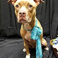 Adopt A Pet :: MATTY - Sterling, MA