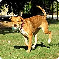 Adopt A Pet :: LUGNUT - Phoenix, AZ