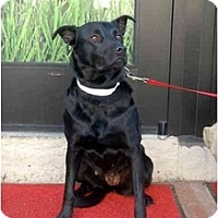 Adopt A Pet :: Mary - Alexandria, VA